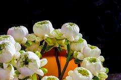 Lotus bianco Immagine Stock Libera da Diritti