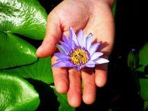 Lotus-Blüte Stockfoto