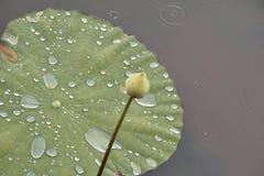 Lotus-bladdaling van water op lotusbloemblad royalty-vrije stock foto's
