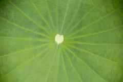 Lotus bladtextur Royaltyfria Bilder