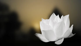 Lotus blanc sur le fond de tache floue Photos libres de droits