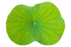 Lotus-Blatt auf lokalisiertem Weiß im Abschluss oben für Hintergrund, Beschaffenheit lizenzfreies stockfoto