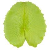 Lotus-Blattisolat lizenzfreie stockfotos