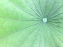 Lotus-Blattmuster Lizenzfreie Stockfotos