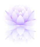 Lotus bleu Photographie stock libre de droits