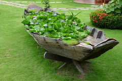Lotus bloeit boot royalty-vrije stock foto
