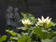 Lotus-bloem in het meer Royalty-vrije Stock Afbeeldingen