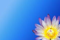 Lotus-bloem op blauwe achtergrond royalty-vrije stock afbeeldingen