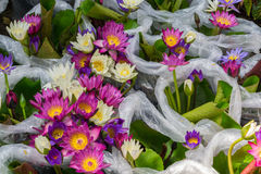 Lotus-bloem in plastic zakken Royalty-vrije Stock Afbeelding