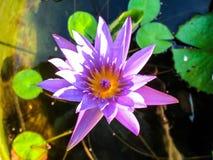 Lotus-bloem voor Boeddhisme royalty-vrije stock foto's