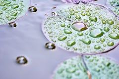 Lotus-bloembladeren in de wildernis - aardachtergrond Stock Afbeeldingen
