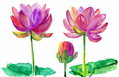 Lotus-bloemen stock illustratie