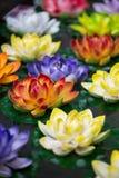 Lotus-bloemen in een vijver Royalty-vrije Stock Afbeeldingen