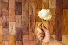 Lotus-bloemen - Witte lotusbloembloemen in vrouwenhanden royalty-vrije stock afbeelding