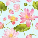 Lotus-bloempatroon Royalty-vrije Stock Foto's