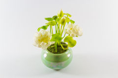 Lotus in bloempot Royalty-vrije Stock Afbeelding