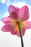 Lotus blomma HDR Arkivbild
