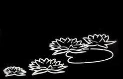 Lotus blomma på svart bakgrund Arkivfoto