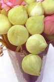 Lotus blommor för att be och dyrkan Royaltyfria Foton