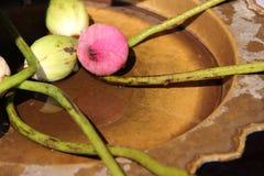 Lotus blommor förläggas, som offerings i en bunke fyllde med vatten (Thailand) arkivfoto
