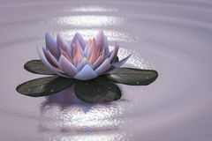 A lotus blossom Stock Photography