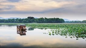 Free LOTUS BLOSSOM SUMMER PALACE Stock Photos - 107515633