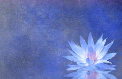 Lotus Blossom Textured Background. Lotus Blossom Blue Textured Background Stock Photography