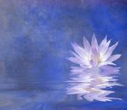 Lotus libre illustration