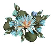 Lotus blue watercolor composition vector illustration
