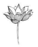 Lotus-Blume im chinesischen traditionellen Malstil Lizenzfreie Stockfotos