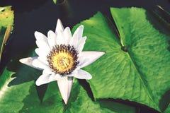 Lotus-Blume, selektiver Fokus Lizenzfreie Stockbilder