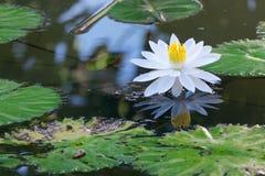 Lotus-Blume und Lotus-Blumenanlagen Lizenzfreie Stockfotos