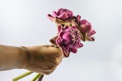 Lotus-Blumen an Hand Lizenzfreie Stockbilder