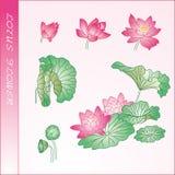 Lotus-Blumenelement Stockbild