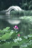 Lotus and bridge. In garden Stock Photos