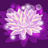 Lotus brillant Photographie stock