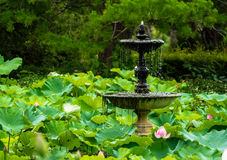 Lotus-Brunnen stockfotografie