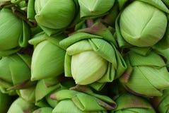 Lotus bud background Stock Image