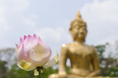 Lotus Buddha backgrounds Royalty Free Stock Photography