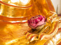Lotus in the Buddha's hand Stock Images