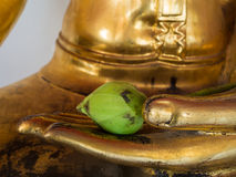 Lotus in the Buddha's hand Royalty Free Stock Image