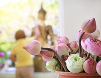 Lotus for Buddhist religious ceremony.  royalty free stock images