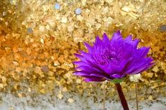 Lotus com fé Imagens de Stock Royalty Free