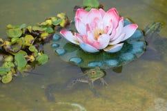 Lotus con una rana fotografie stock
