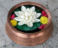 Lotus in Copper Vase. With colored flowers Stock Photo