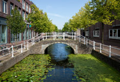 Lotus Covered Canal in the Netherlands with Pedestrian Bridge Royalty Free Stock Image