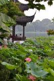 Lotus d'été en pleine floraison images libres de droits