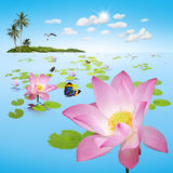 Lotus damm med ön Royaltyfria Foton