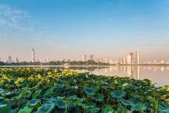Lotus damm och modern stad Arkivbilder