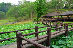 Lotus damm på den Fang Hot våren Arkivbild